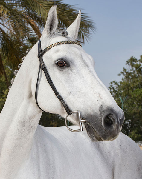 Peterle FBH Horse